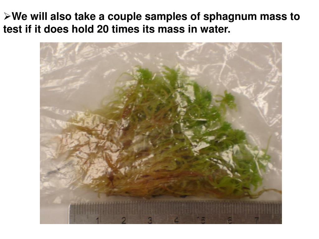 We will also take a couple samples of sphagnum mass to