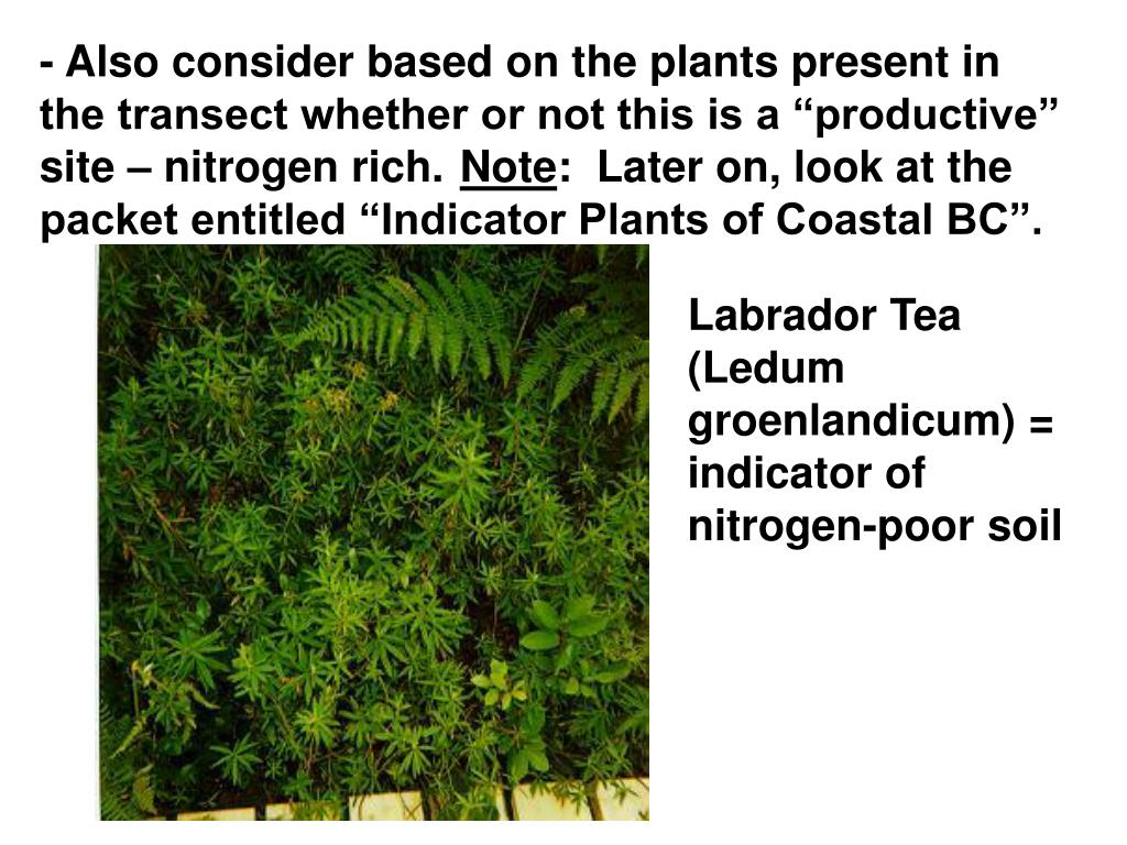 "- Also consider based on the plants present in the transect whether or not this is a ""productive"" site – nitrogen rich."