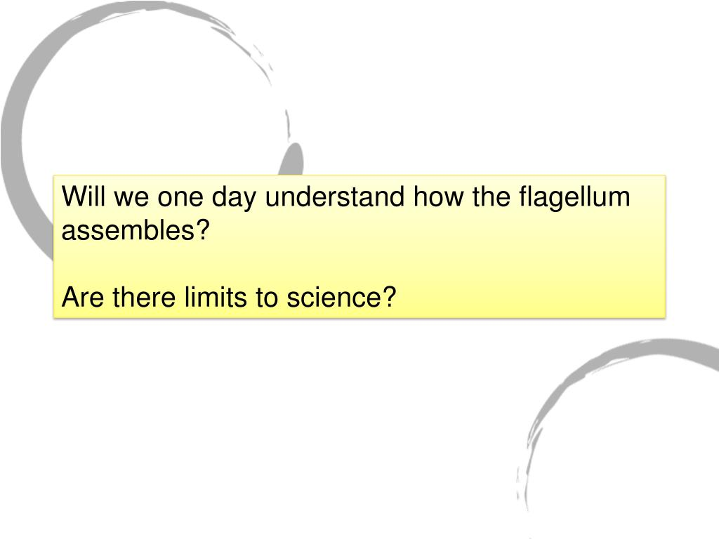 Will we one day understand how the flagellum assembles?