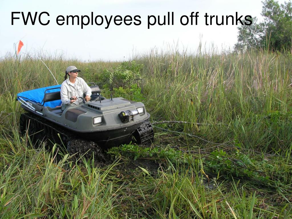 FWC employees pull off trunks