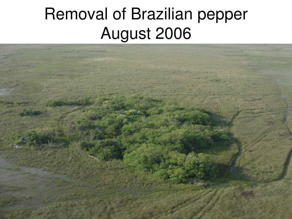 Removal of Brazilian pepper