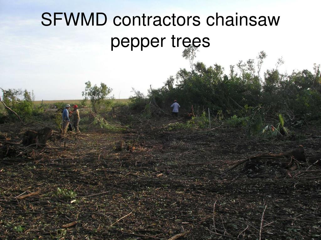 SFWMD contractors chainsaw pepper