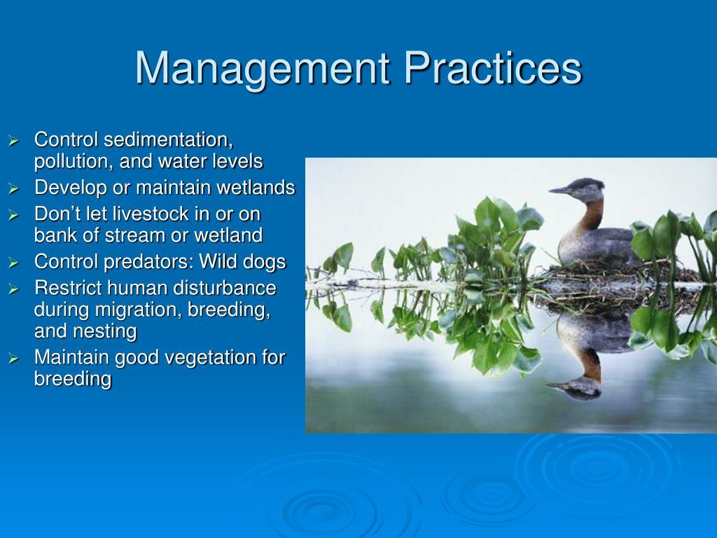 Management Practices