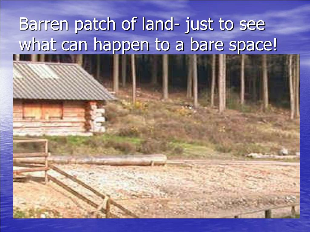 Barren patch of land- just to see what can happen to a bare space!