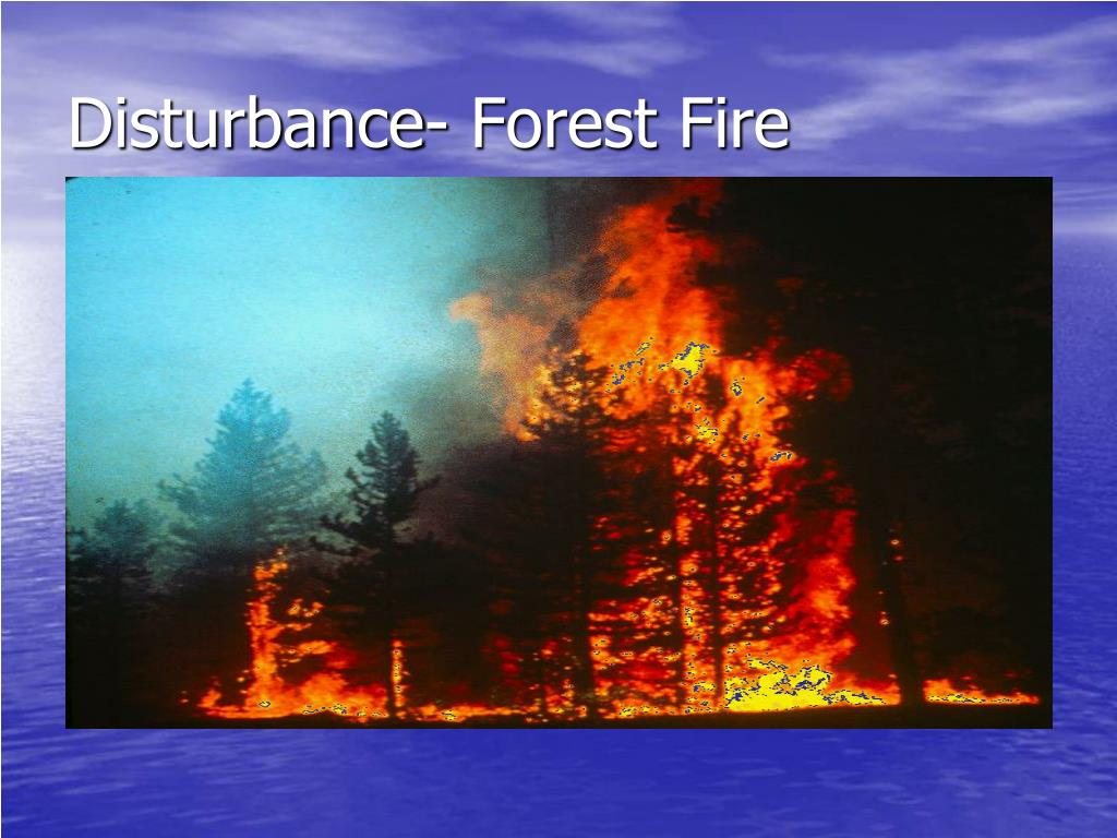 Disturbance- Forest Fire