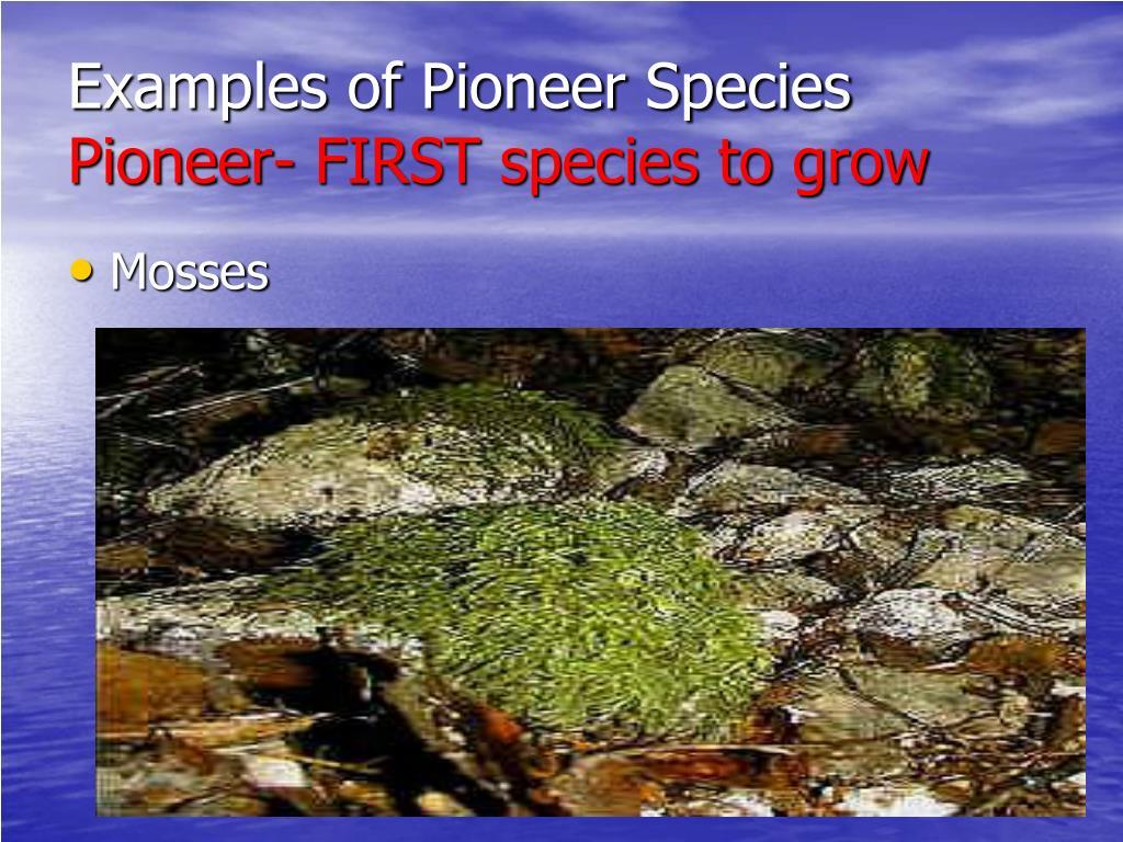 Examples of Pioneer Species