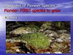 examples of pioneer species pioneer first species to grow