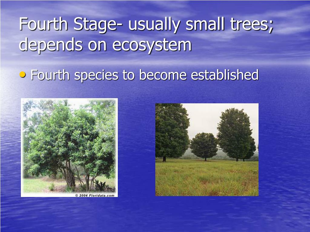 Fourth Stage- usually small trees; depends on ecosystem