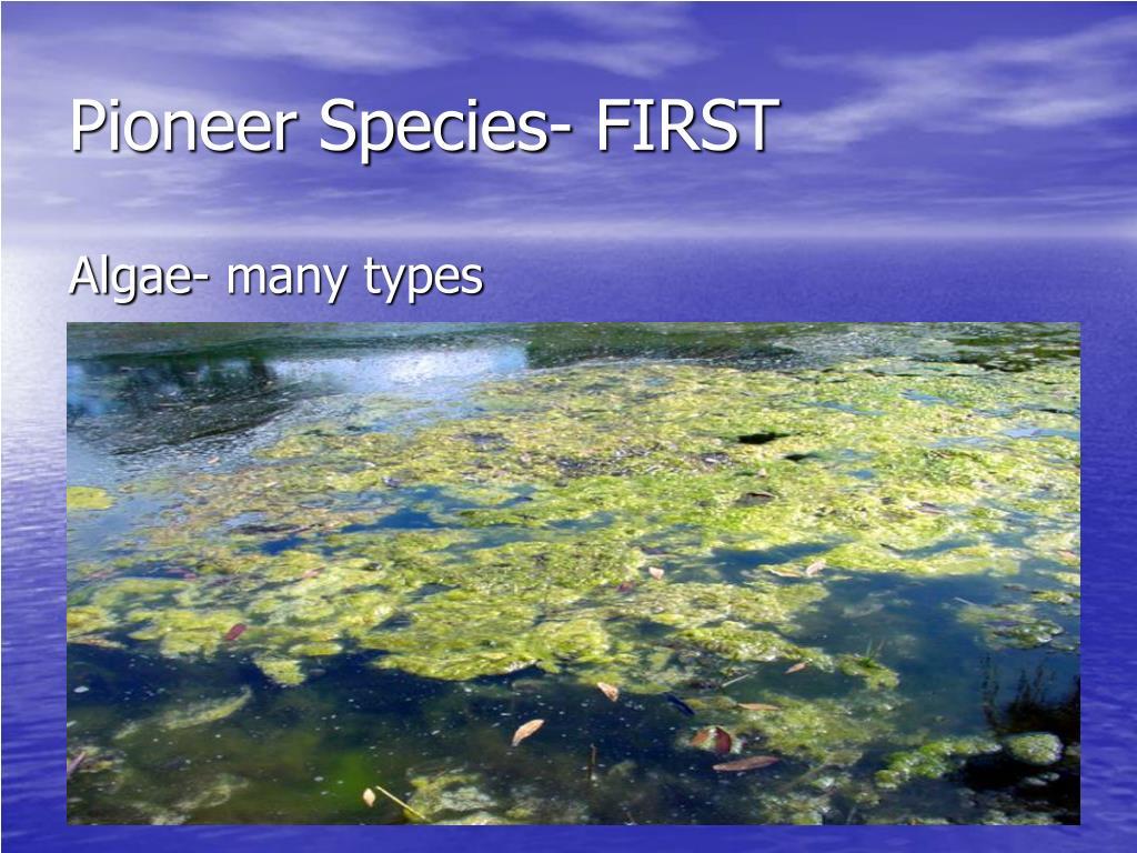Pioneer Species- FIRST