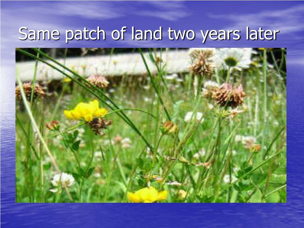 Same patch of land two years later