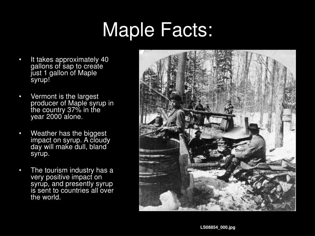 Maple Facts: