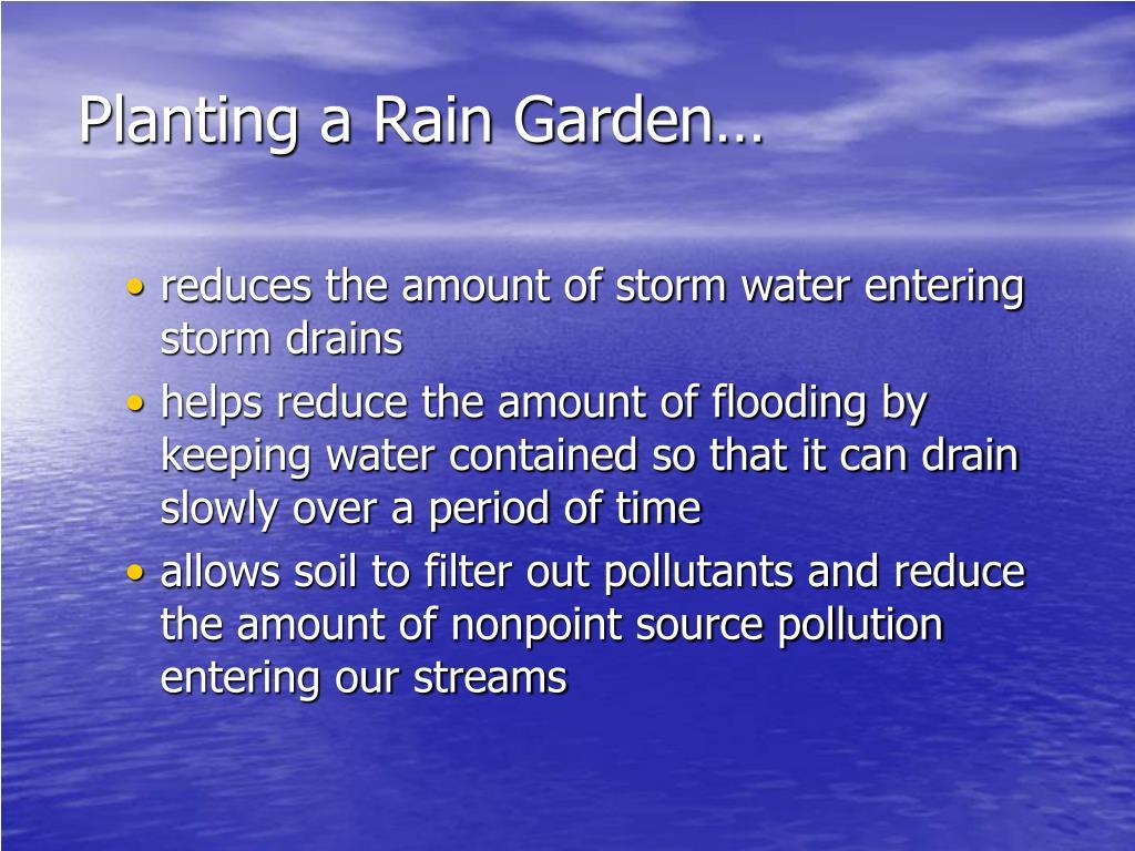 Planting a Rain Garden…