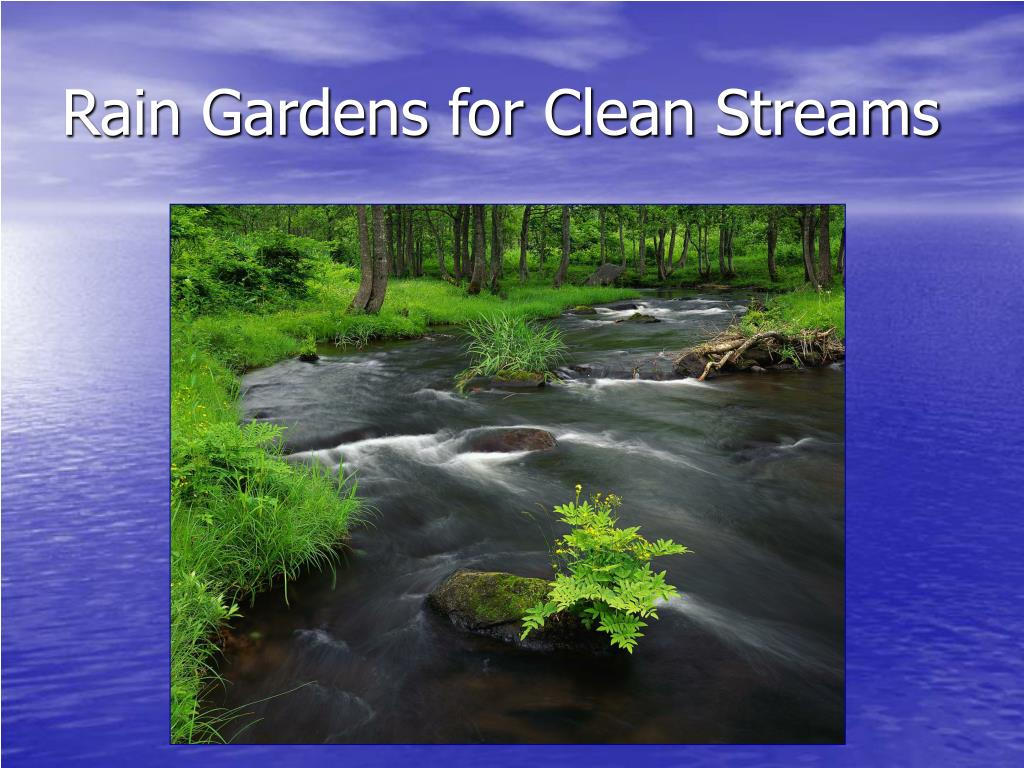 Rain Gardens for Clean Streams