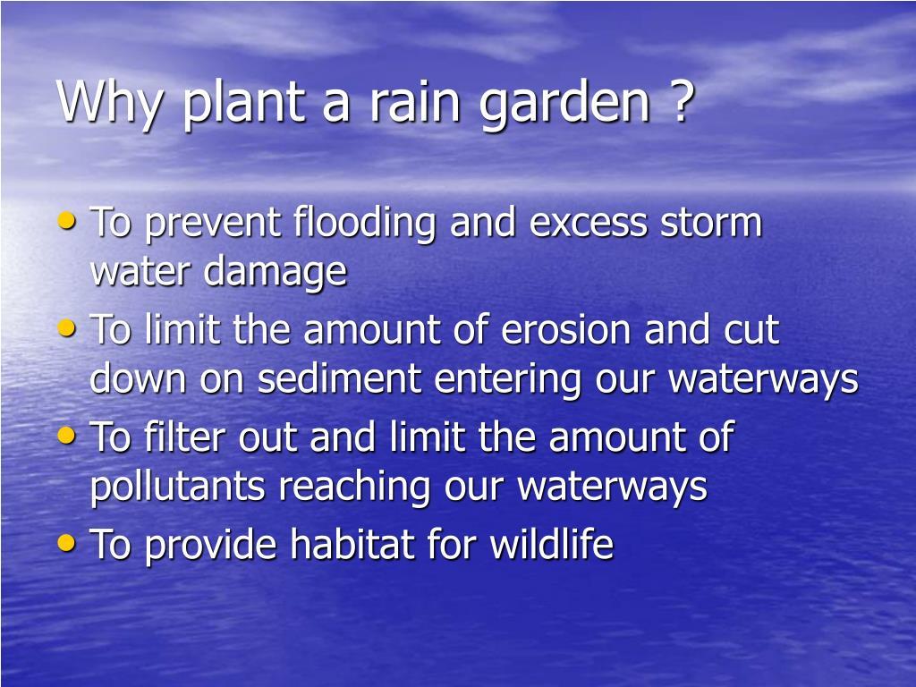 Why plant a rain garden ?