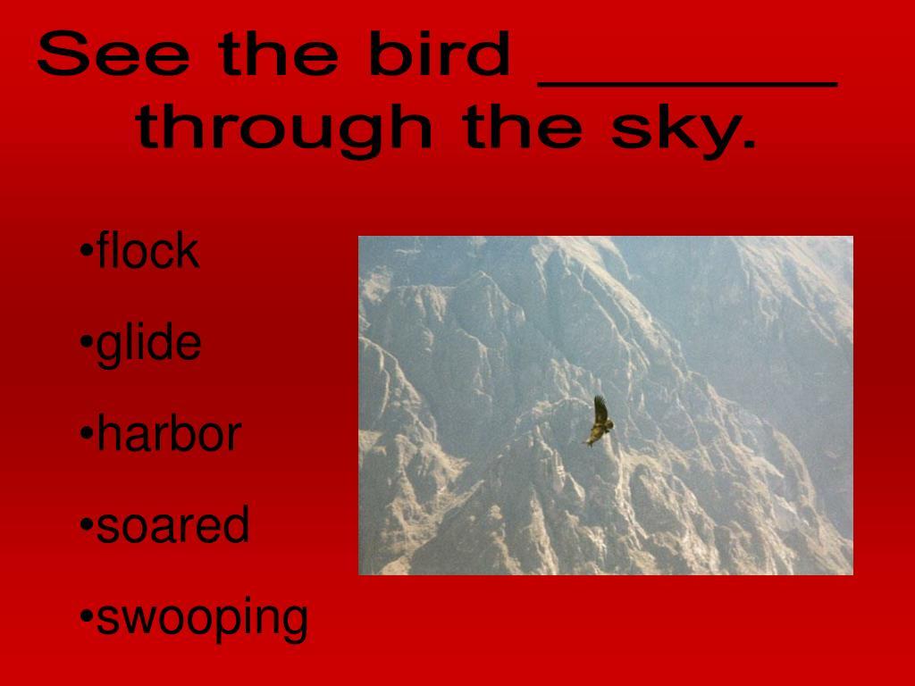 See the bird ______