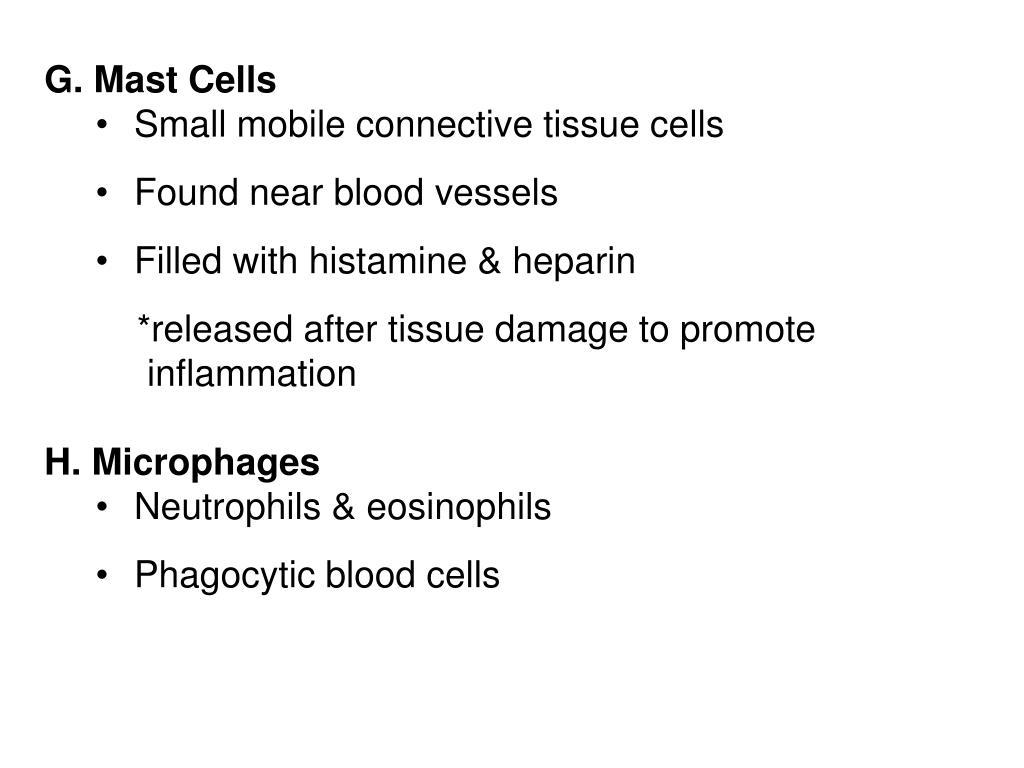 G. Mast Cells