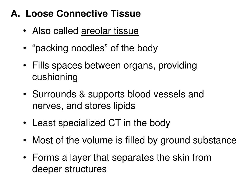 A.  Loose Connective Tissue