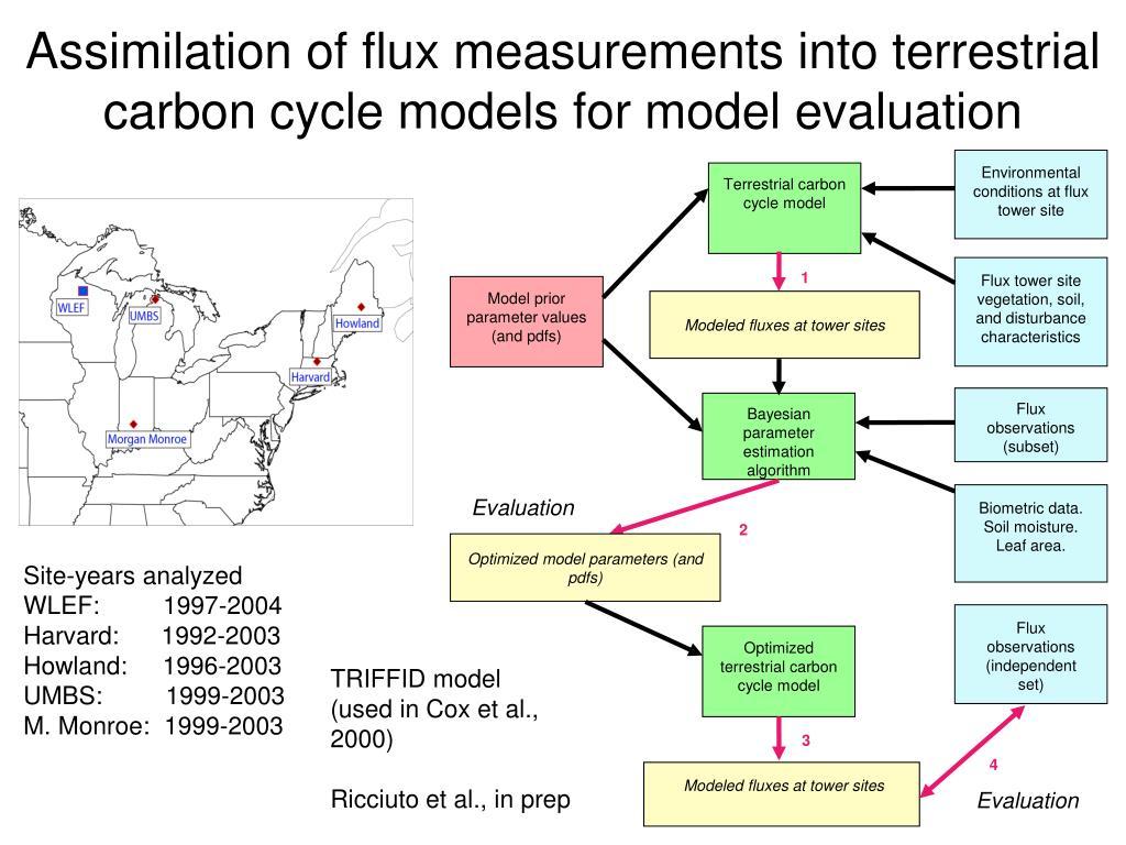 Terrestrial carbon cycle model