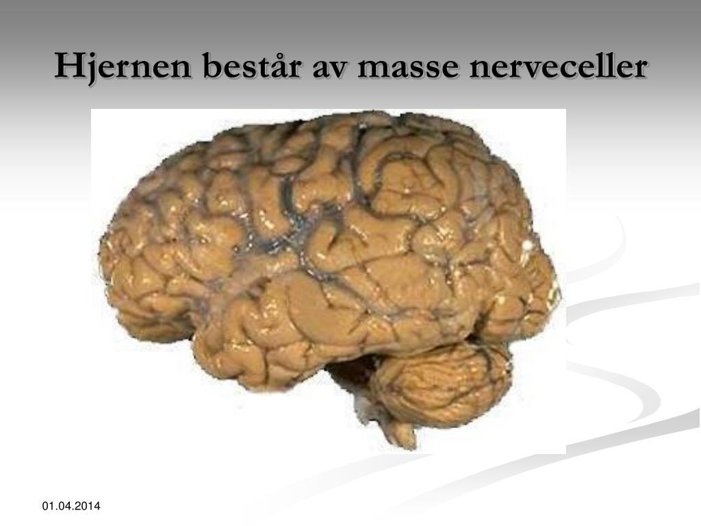 Hjernen består av masse nerveceller