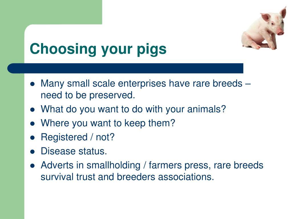 Choosing your pigs