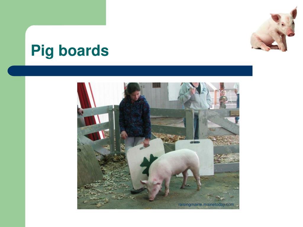 Pig boards