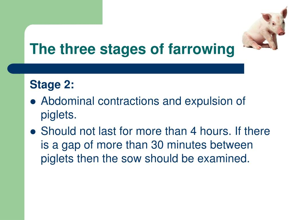 The three stages of farrowing