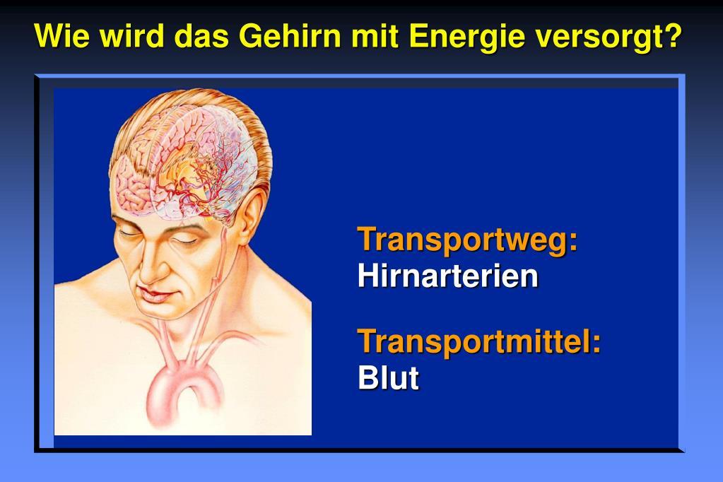 Wie wird das Gehirn mit Energie versorgt?