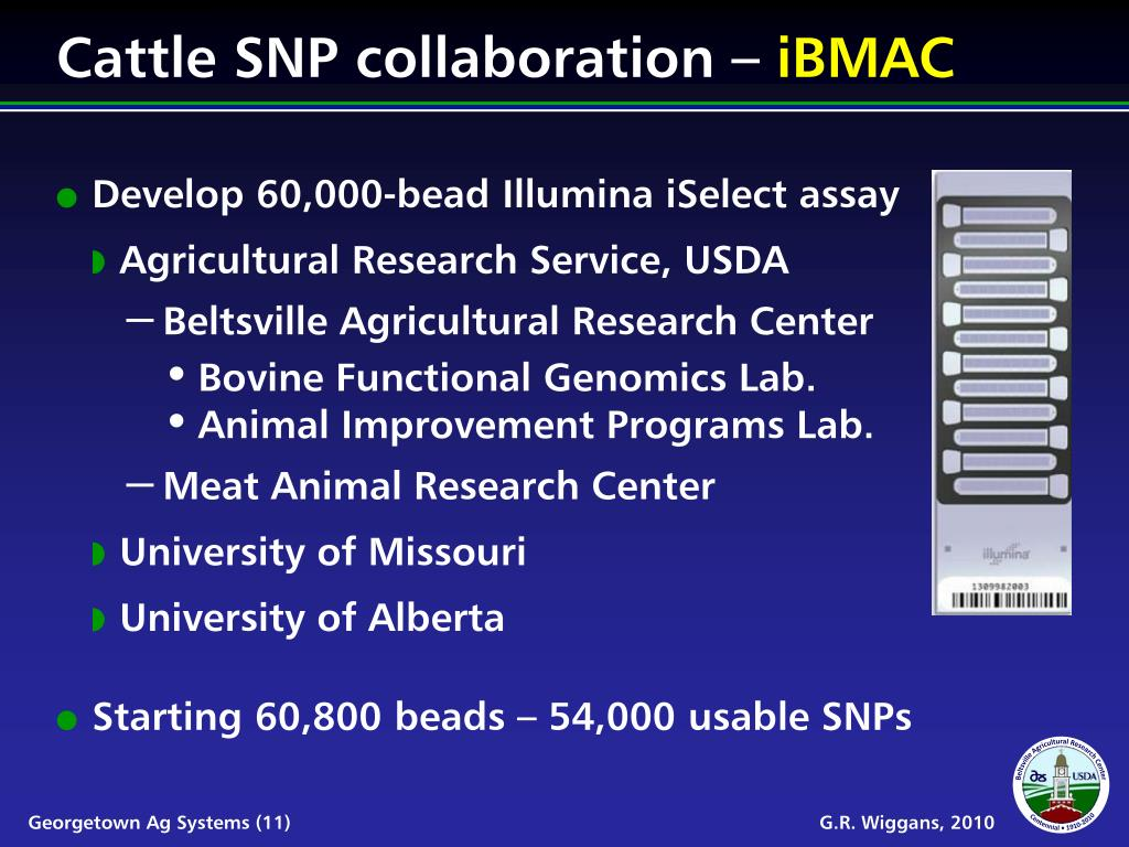 Cattle SNP collaboration –