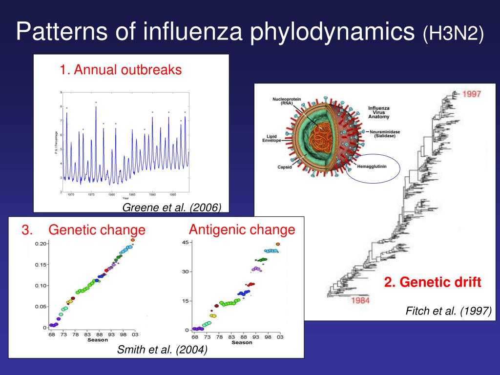 Patterns of influenza phylodynamics