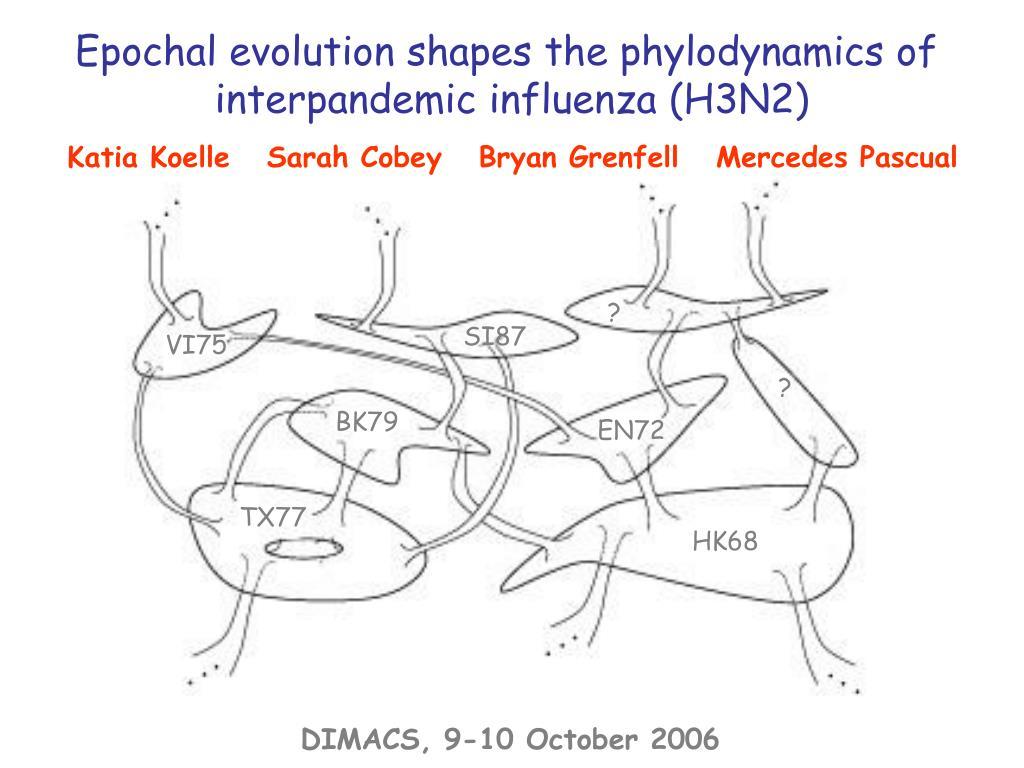 Epochal evolution shapes the phylodynamics of