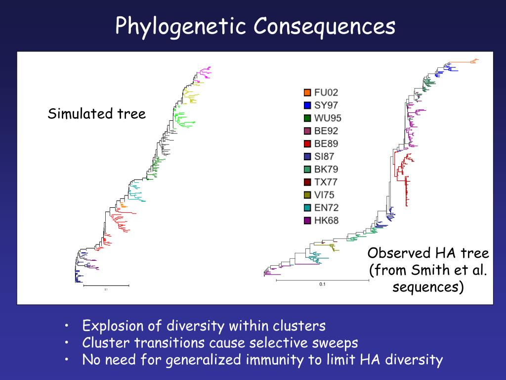 Phylogenetic Consequences