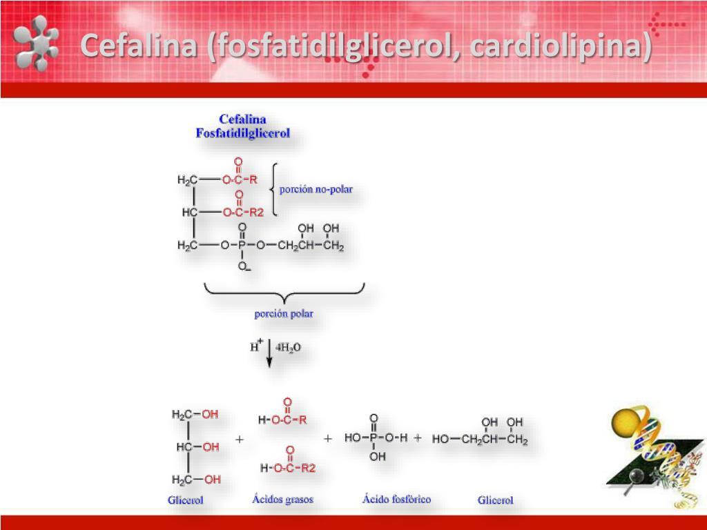 Cefalina