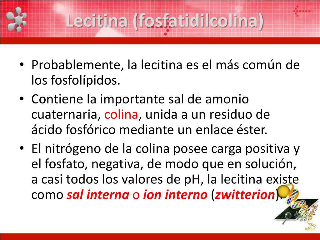 Lecitina (