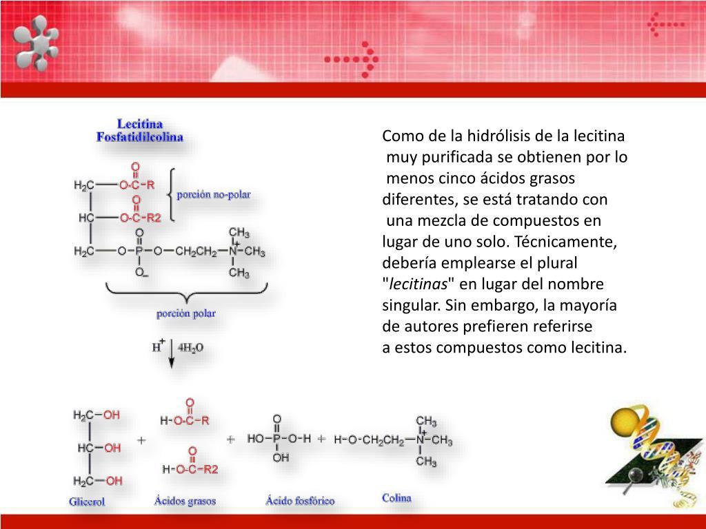 Como de la hidrólisis de la lecitina