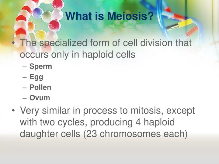 What is Meiosis?