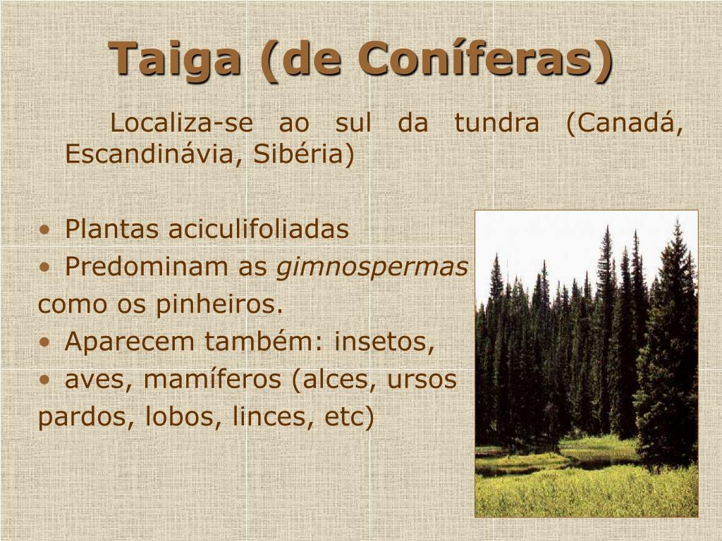 Taiga (de Coníferas)