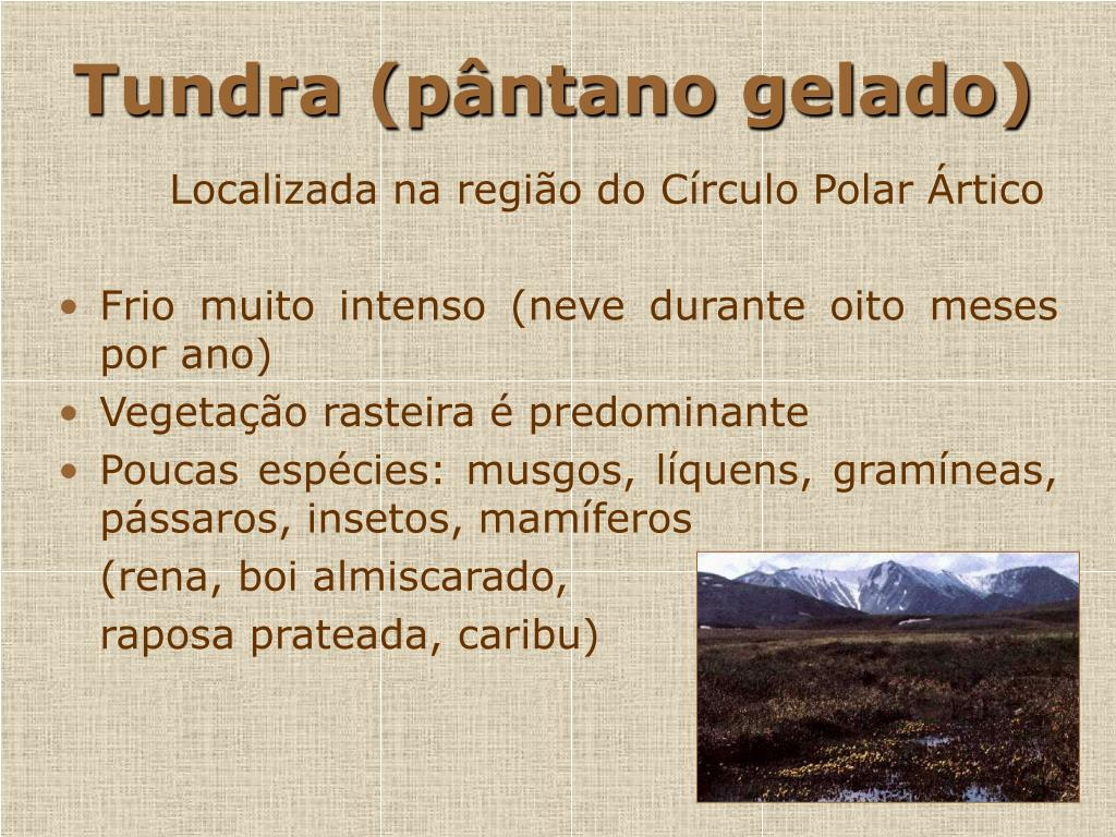 Tundra (pântano gelado)