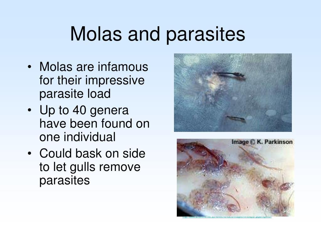 Molas and parasites