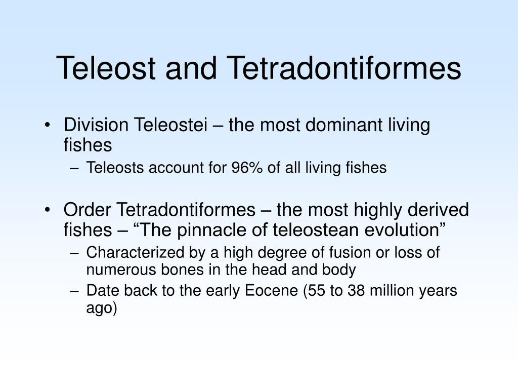 Teleost and Tetradontiformes