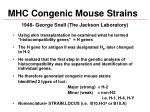 mhc congenic mouse strains