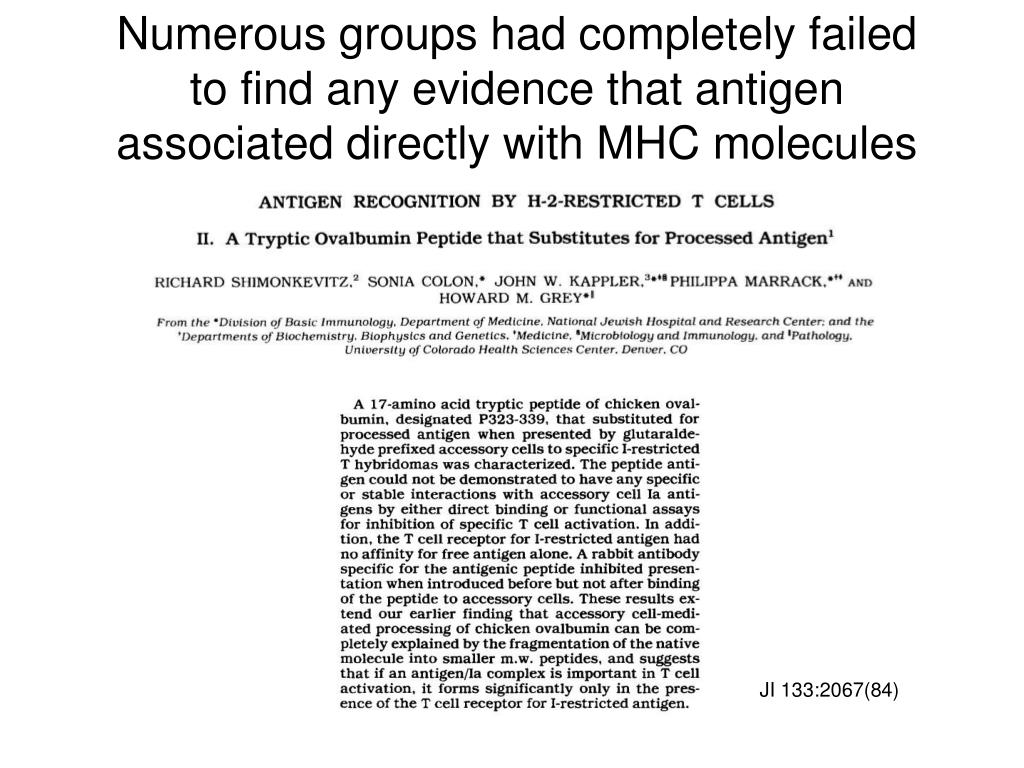 Numerous groups had completely failed to find any evidence that antigen associated directly with MHC molecules