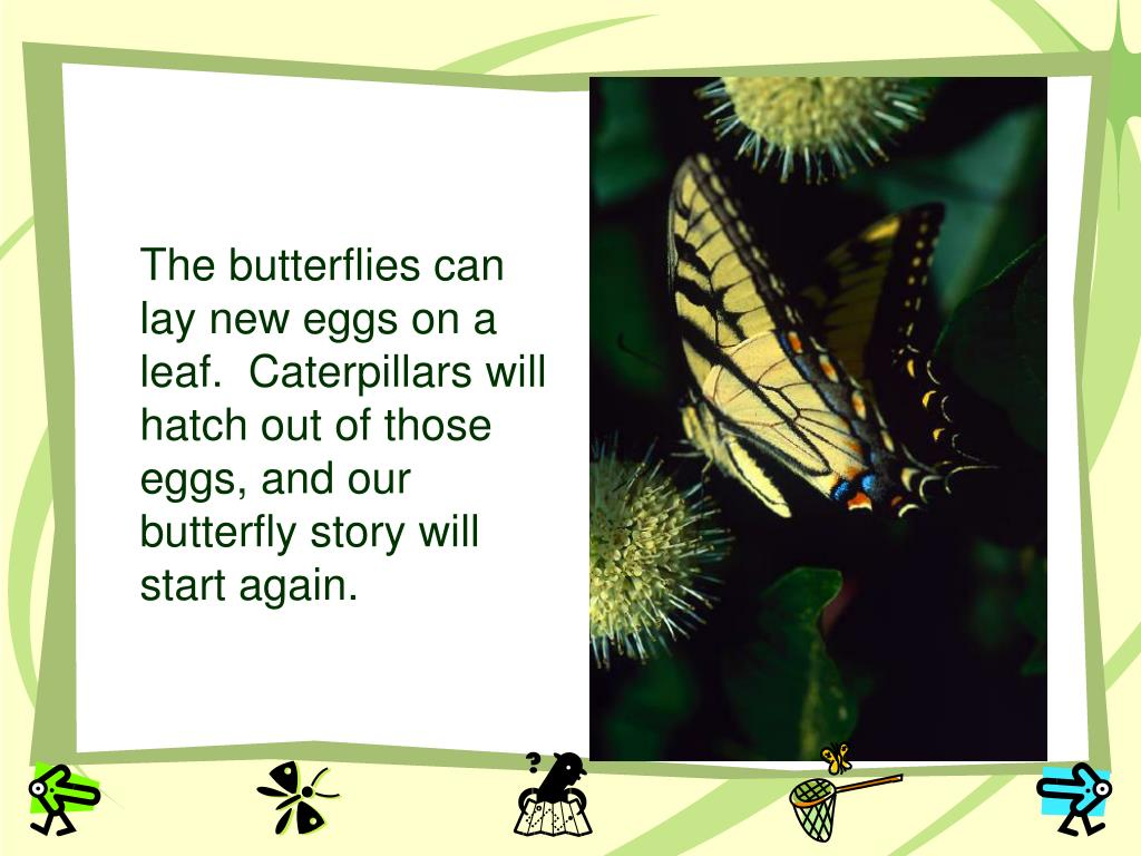 The butterflies can lay new eggs on a leaf.  Caterpillars will hatch out of those eggs, and our butterfly story will start again.