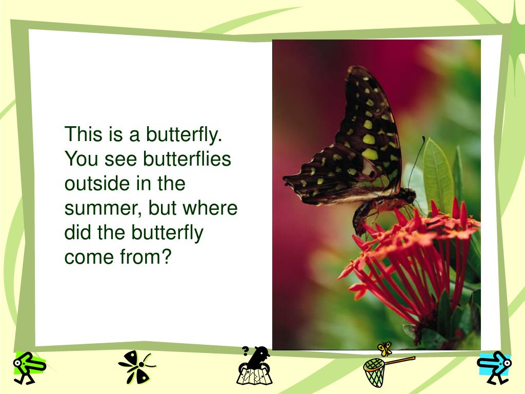 This is a butterfly.  You see butterflies outside in the summer, but where did the butterfly come from?