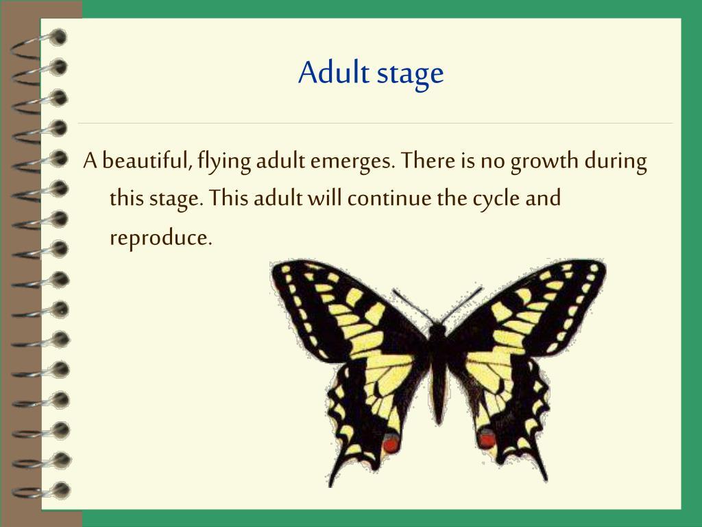 Adult stage