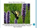 adult butterfly stage