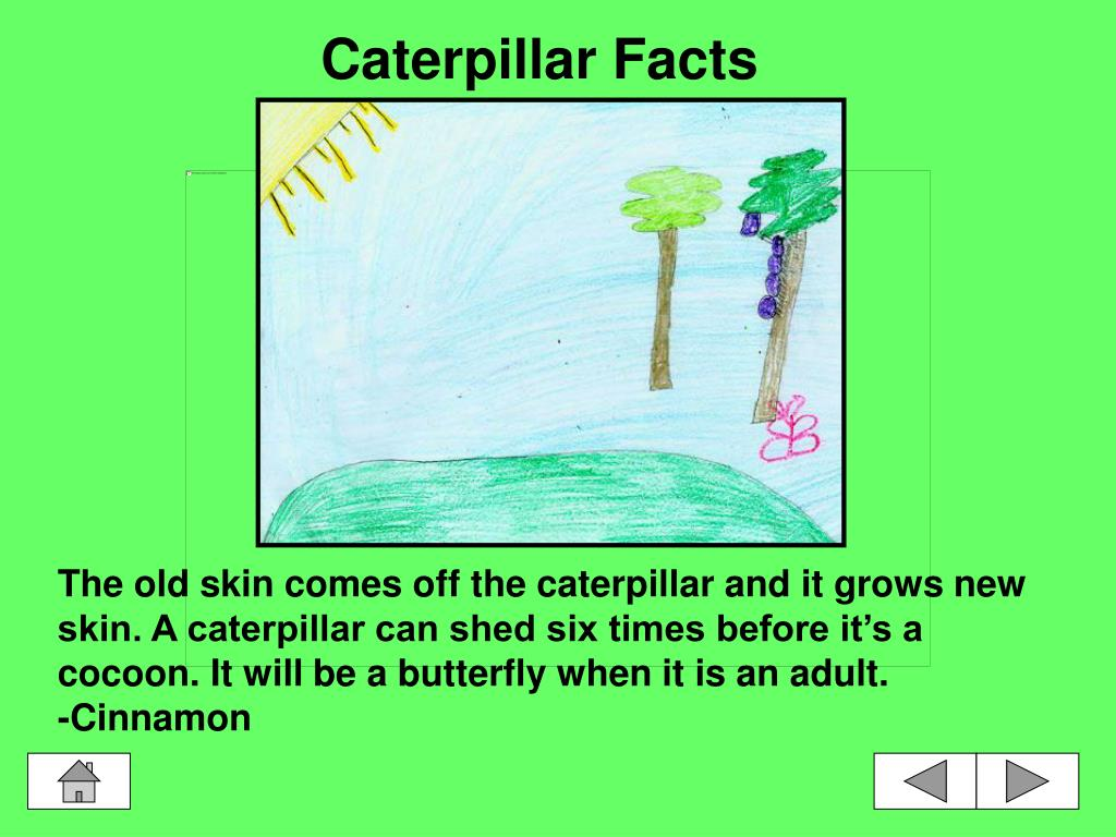 Caterpillar Facts