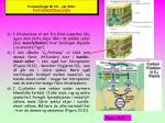 forelesninger bi 101 v r 2003 fotorespirasjon28