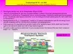 forelesninger bi 101 v r 2003 hvordan de to fotosystemer virker sammen forts