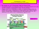 forelesninger bi 101 v r 2003 hvordan de to fotosystemer virker sammen19