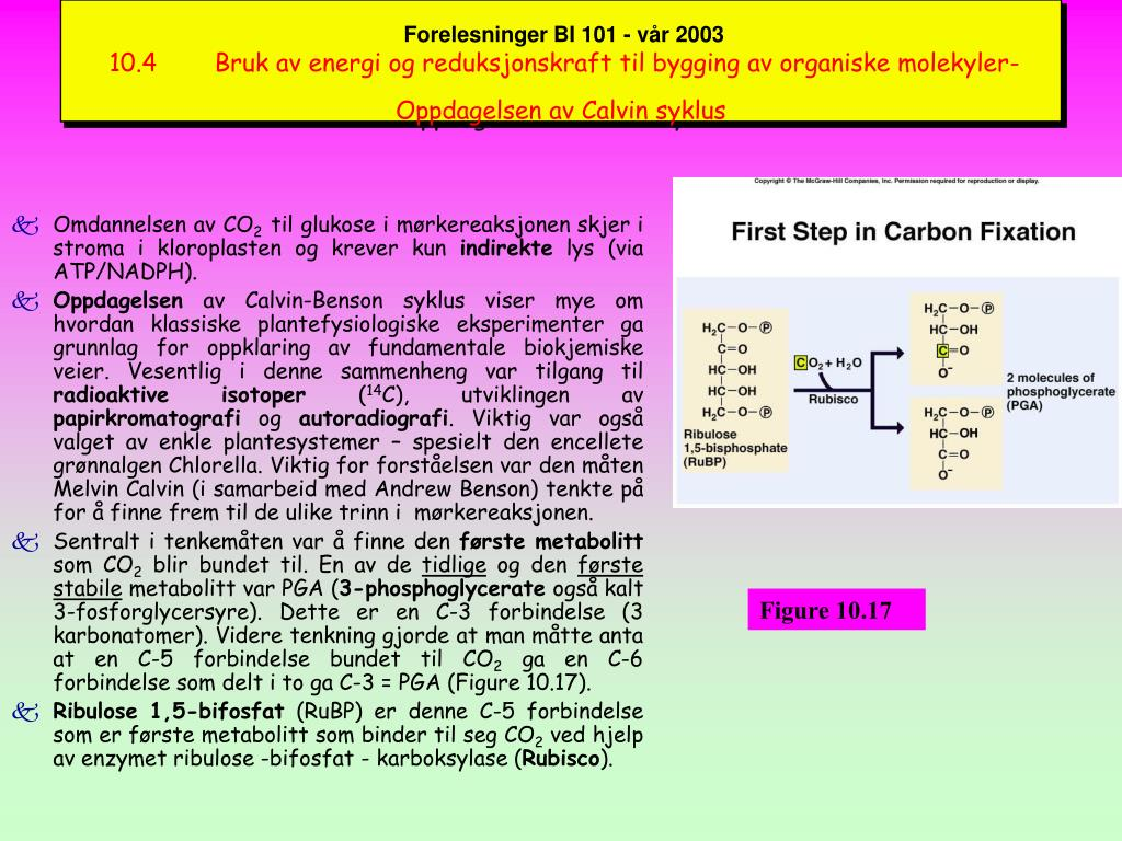 Forelesninger BI 101 - vår 2003